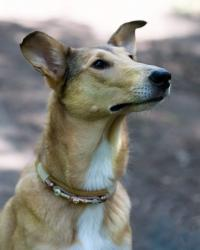Asa Nanica A Penny from Heaven